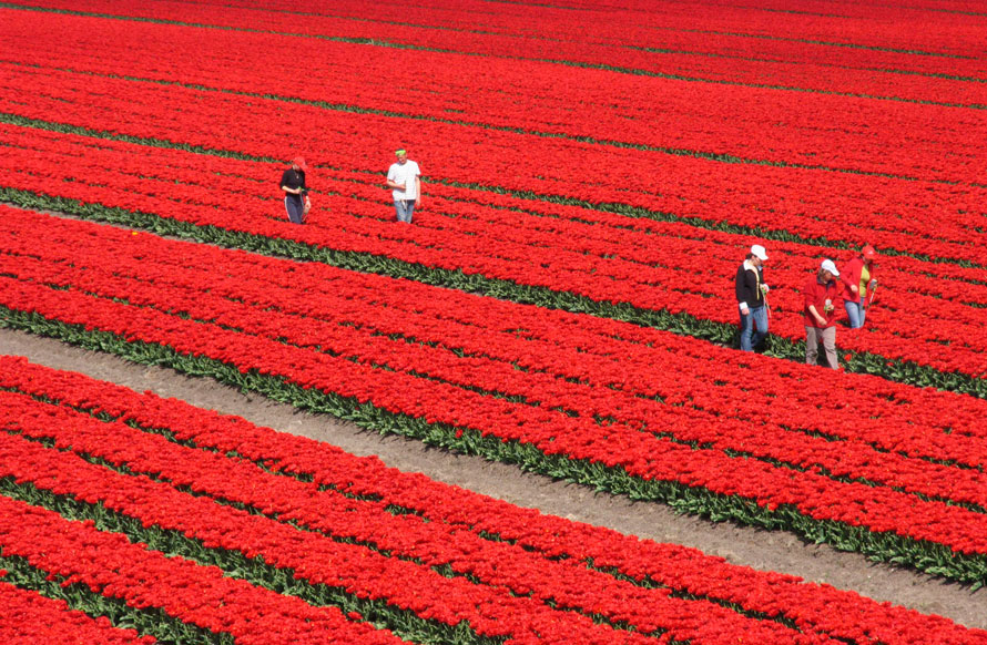 28.04.2010 Нидерланды
