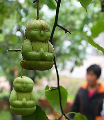 Груши в форме Будды