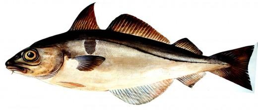 Лучшая рыба — не колбаса!