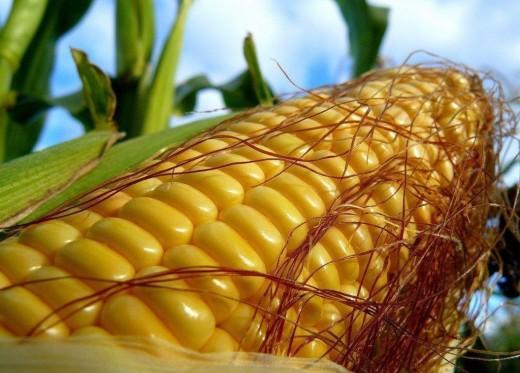 Кукуруза обеспечивает всеми витаминами