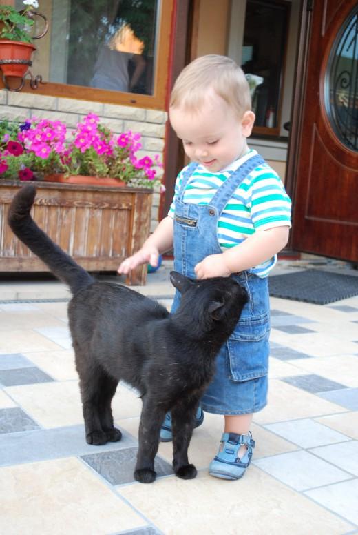 Домашние животные и забота о них