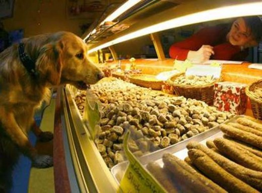 В Мадриде открылась кондитерская для животных