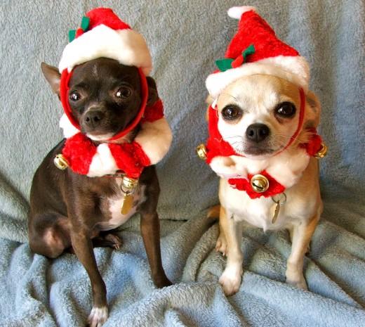 Аксессуары для домашних животных