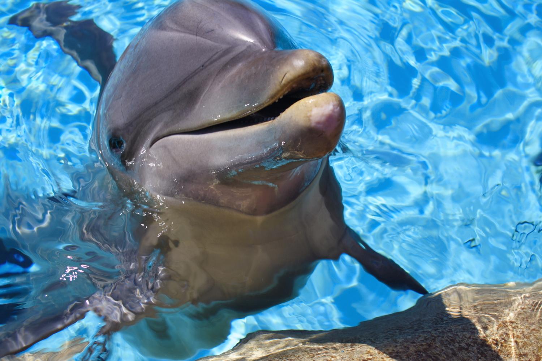 дельфин утро картинки