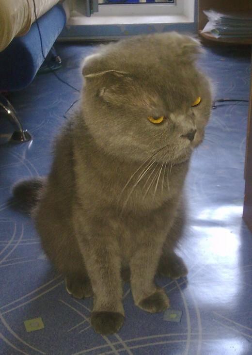 Сегодня Всемирный день кошек