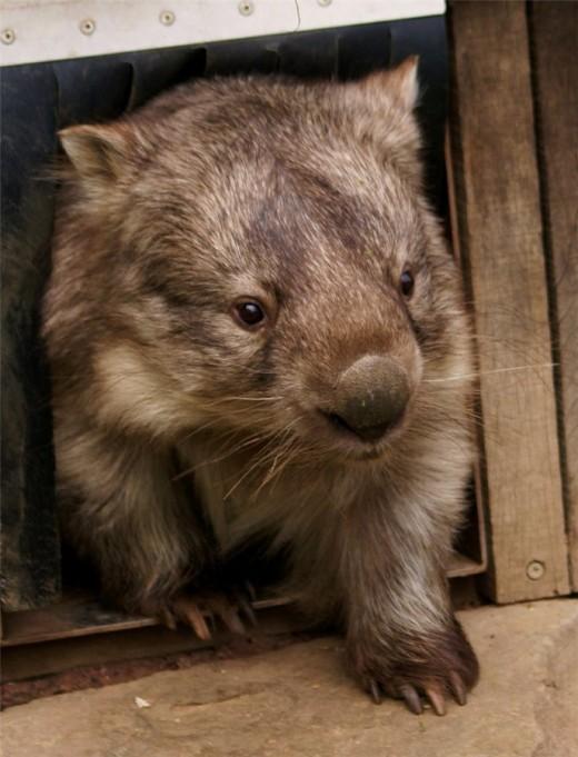 Редкие животные мира: мировая экзотика