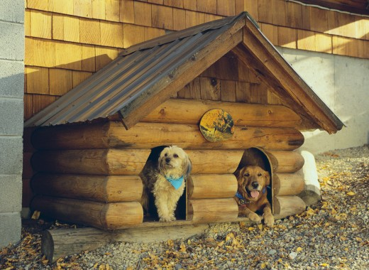Дом для четвероногого друга