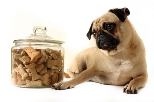 Хороший корм для собак
