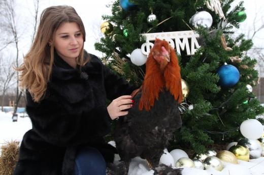 26 декабря День Фермера на Городской ферме ВДНХ
