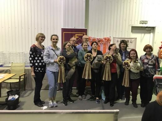 Голубой солид Amazing Aisha Allen стал победителем выставки «Зоомир Юга России 2017»