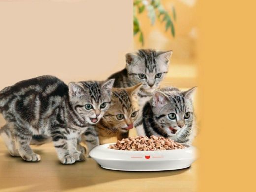 Полноценный корм для котят