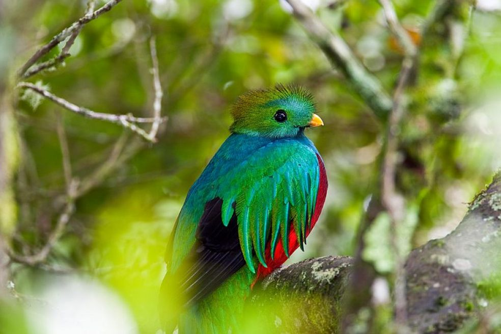 Квезаль — священная птица ацтеков