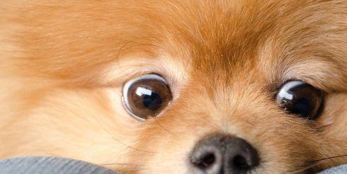 Ученые узнали, почему люди больше сочувствуют собаке, чем человеку