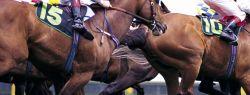 Из истории лошадиных скачек