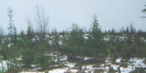 Двое жителей Минской области подозреваются в незаконном отстреле трех лосей на территории Лунинецкого района