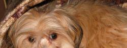 Как выбирать игрушку для щенка?