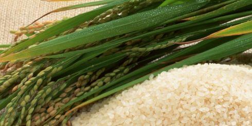 Рис по-азербайджански, вьетнамски, японски…