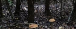 Кто в лес, кто по грибы в Испанию
