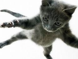 Летающие котэ