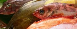 Стоя у рыбного прилавка