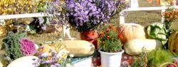 3-4 сентября Праздник Урожая на Летнем рынке «Фермерия» ВДНХ