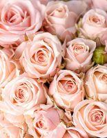 Розы на все случаи жизни
