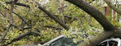 Страховой случай при падении дерева на авто