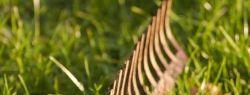 Упорство бабочки в стремлении к свече или почему «наступают на одни и те же грабли»