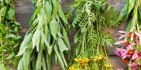 Где купить лекарственные препараты из трав и натуральные лечебные средства?