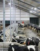 Комплексное строительство животноводческих построек