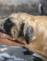 Международный день бездомных животных отмечается 15 августа