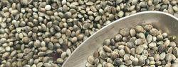 Полезность семян конопли