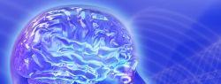 Объем человеческого мозга уменьшается