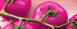 Томаты сиреневого цвета – страшные, но очень полезные