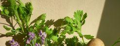 Лекарственные травы оказались опасными для здоровья