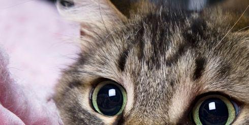 Фелинотерапия: от чего лечат кошки?