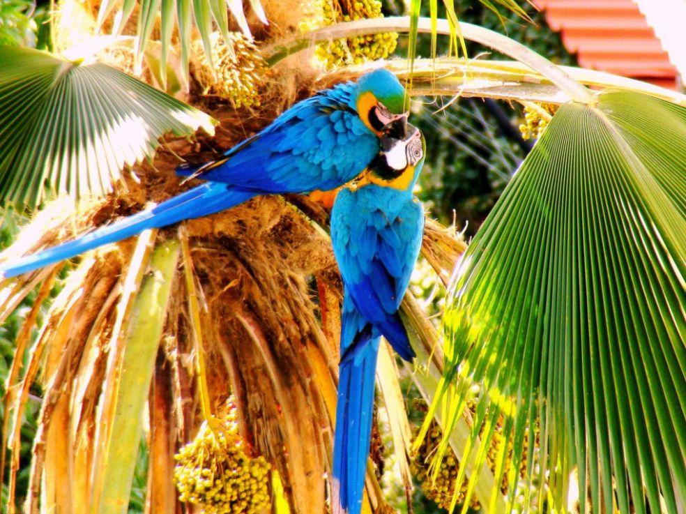 Поцелуй попугаев