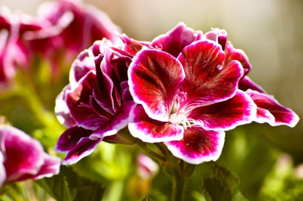 Цветы для флегматика