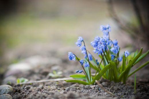 Цветы на 8 марта?