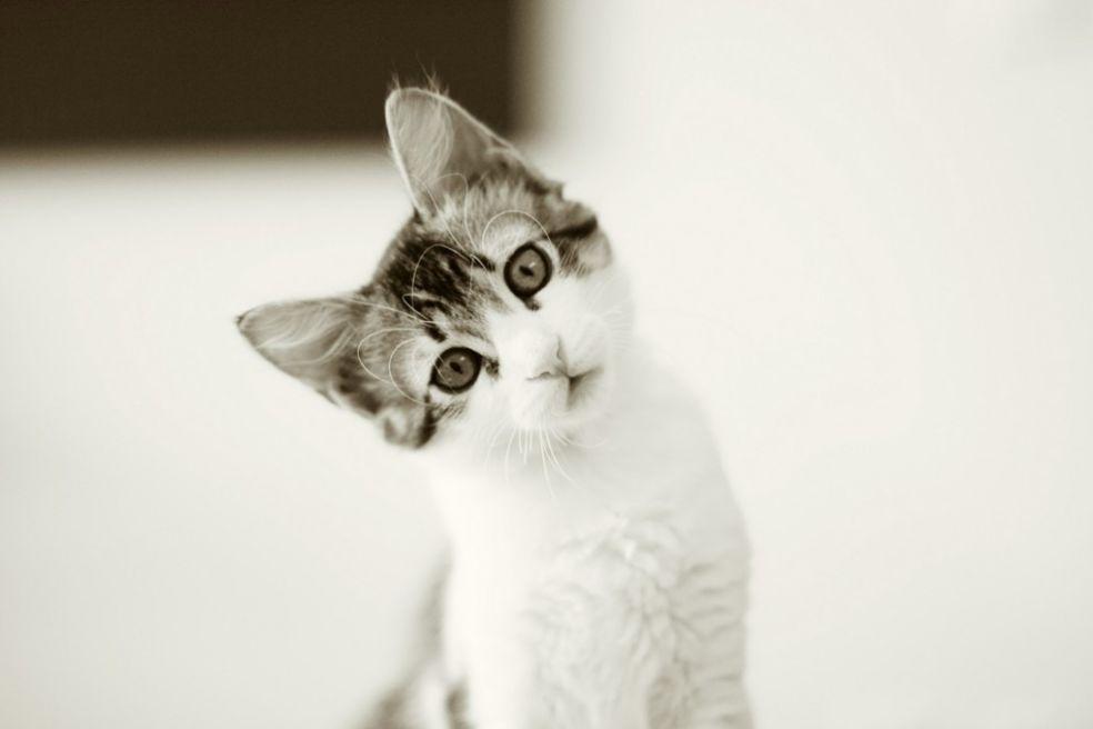 Мульт-коты
