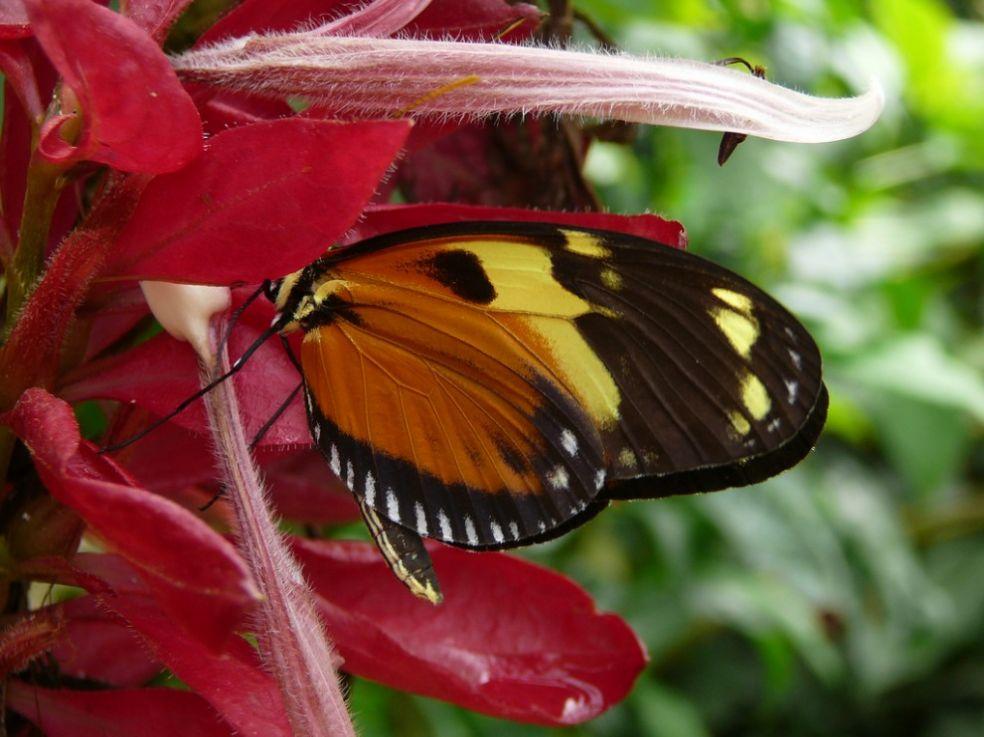 Бабочка в Честерском зоопарке