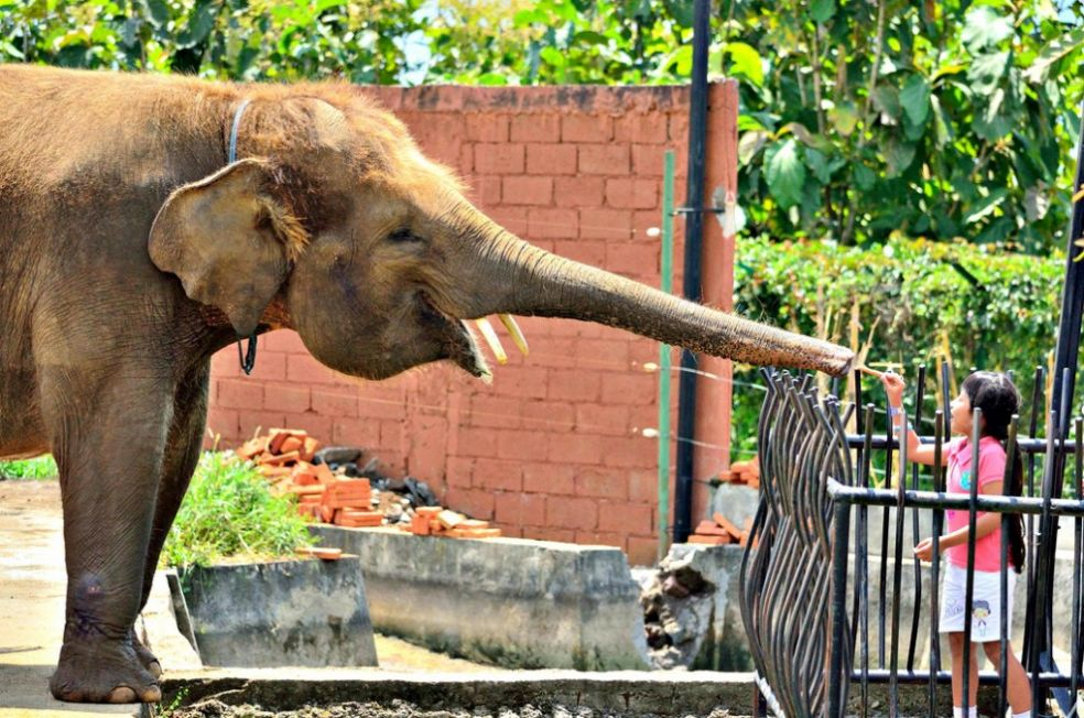 Индонезийский зоопарк