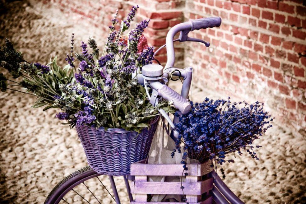 Велосипед в лиловых тонах
