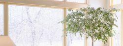 Фитодизайн – интерьер-дизайн при помощи растений