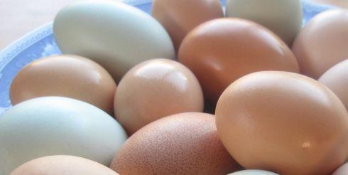 Польза или вред от куриных яиц?