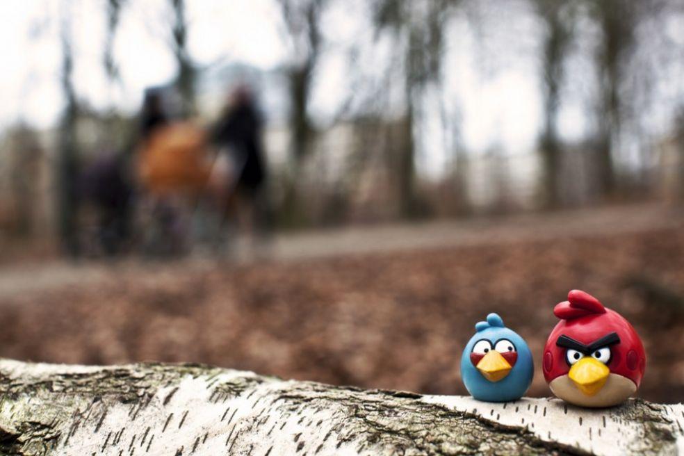 История злых птичек