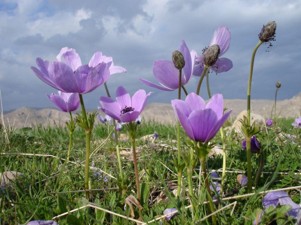 Весна в Курдистане