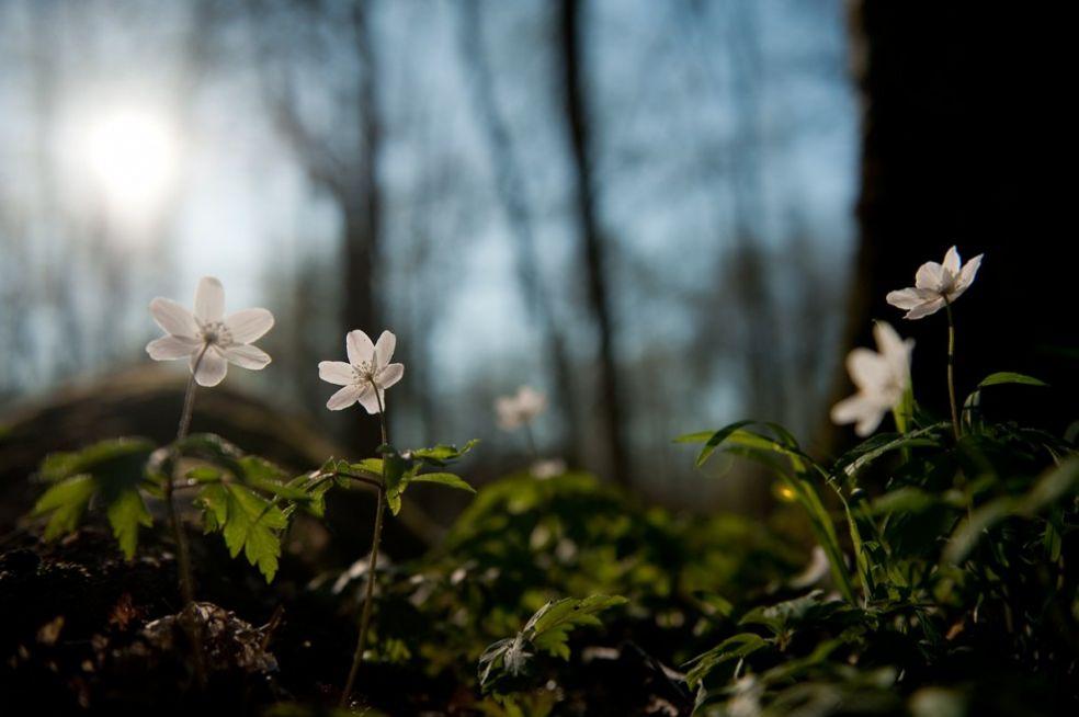 Весна в Швеции