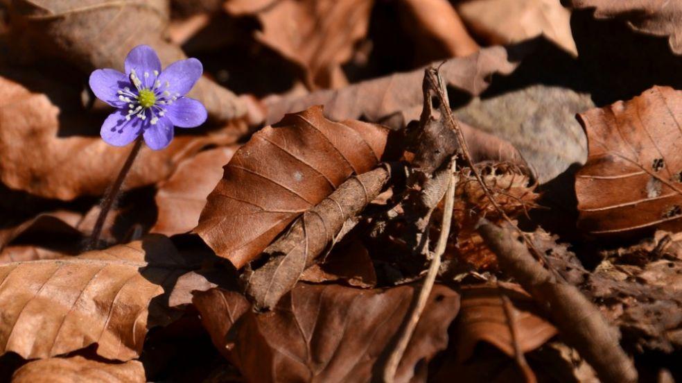 Весна в Австрии
