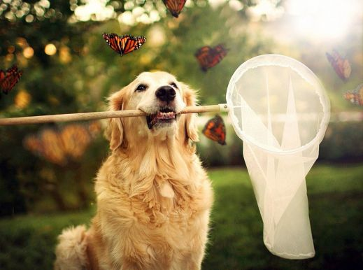 Чэмп – самый счастливый пес в мире